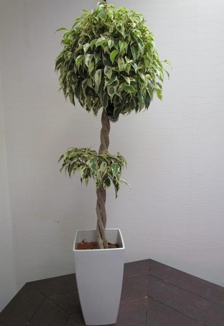 名古屋市千種区覚王山の花屋グラッシーの観葉植物